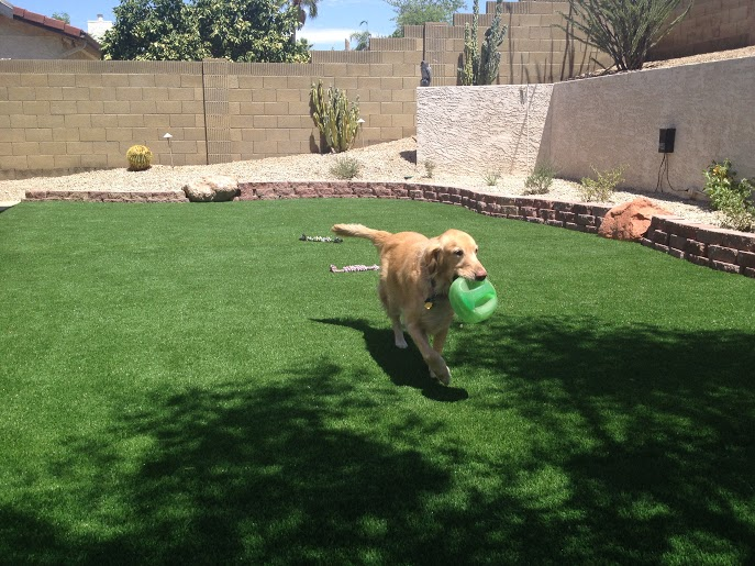 Are lawn chemicals poisonous to your family and pets?