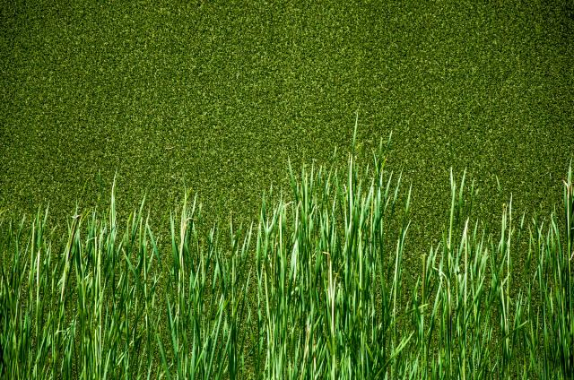A Quick Guide to Prolonging the Life of Your Artificial Turf - image prolonging-artificial-turf on http://www.sunburstlandscaping.com