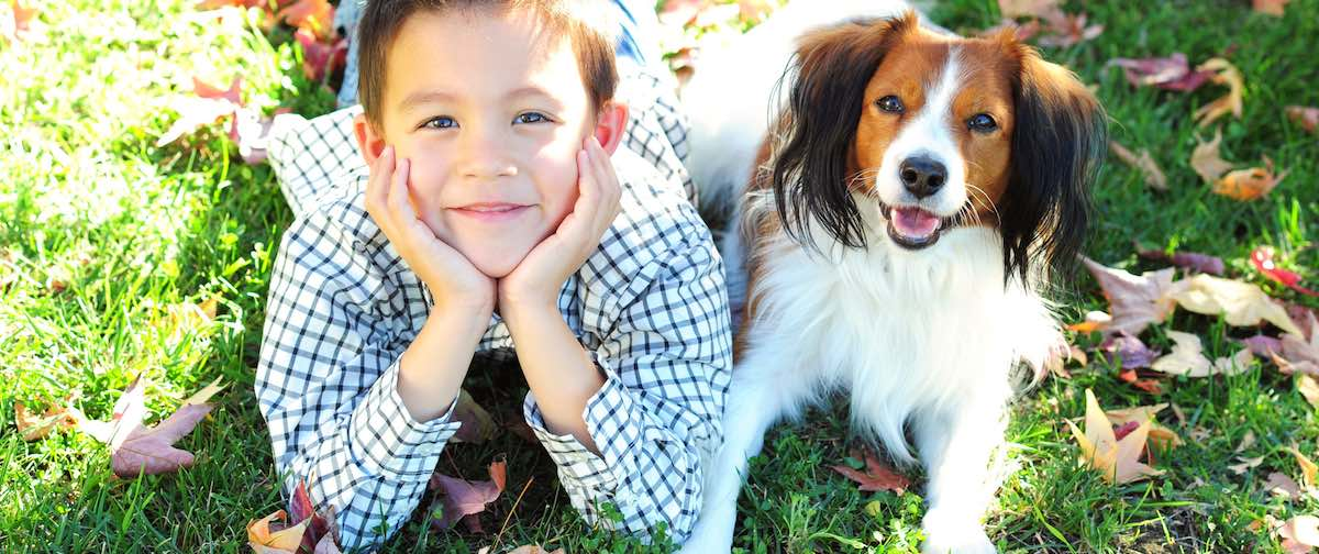 5 tips for dog friendly yards