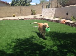 Artificial Turf for Dog Runs