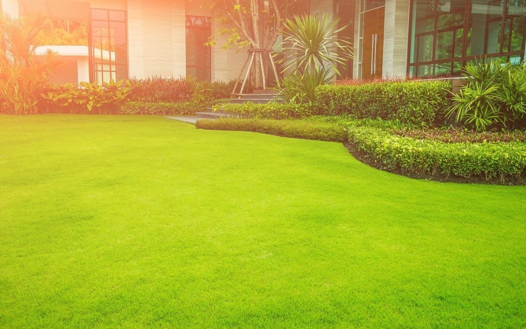 Consumer's Guide in Buying the Right Type of Artificial Grass for Their Properties