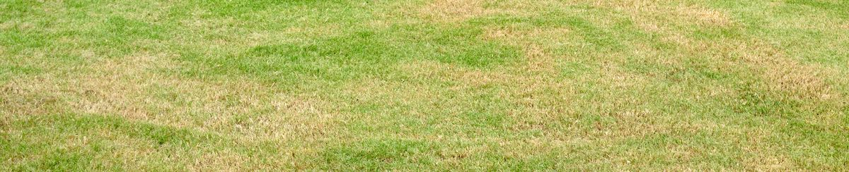 Do You Have Dry Grass? Use These Alternatives