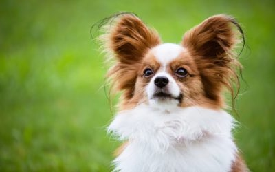 Dog-Friendly Backyard Landscaping Ideas